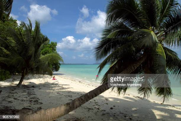 palm trees on the beach, havelock island, andaman islands - www picture com stock photos and pictures