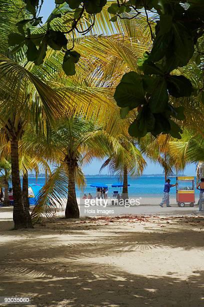 Palm trees on the beach, Luquillo Beach, Puerto Rico