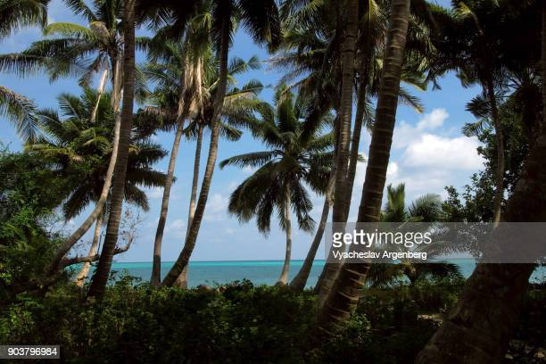 Palm trees on the beach, paradise fantasy, Havelock island, Andamans
