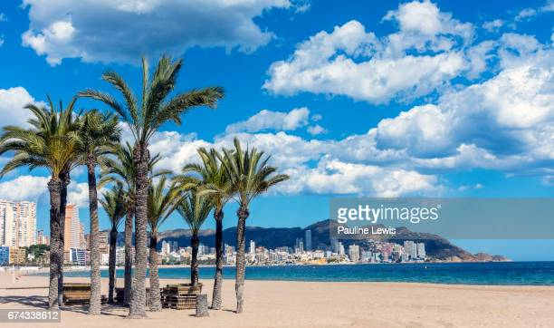 palm trees on the beach - alicante stock pictures, royalty-free photos & images