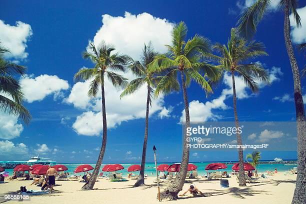 palm trees on the beach,  waikiki beach,  oahu,  hawaii,  usa - ワイキキビーチ ストックフォトと画像