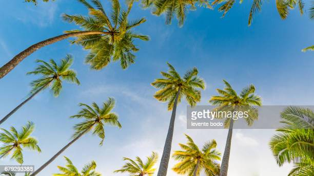 Palm trees on the beautiful sunset background. Tropical vacation background concept. Moody sky