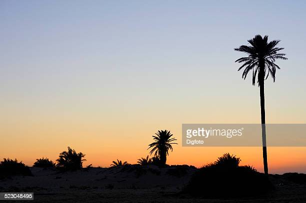 palm trees on the flamingo island ras rmel, djerba, tunisia, maghreb, north africa, africa - djerba photos et images de collection