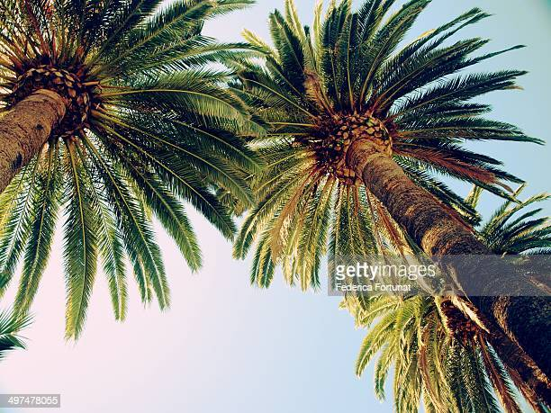 Palm trees on the French Riviera