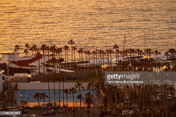 Palm trees on the harbor by Pacific Ocean in Japan