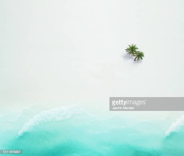 palm trees on the sandy beach and turquoise ocean from above - paisajes de republica dominicana fotografías e imágenes de stock
