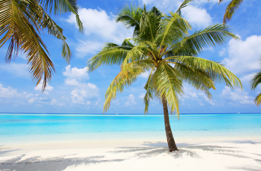 Palm Trees On The Beach: Palm Trees On The Tropical Beach Of Maldives. Fine Art