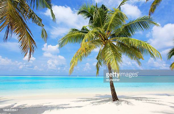 Palm trees on the tropical beach of Maldives.