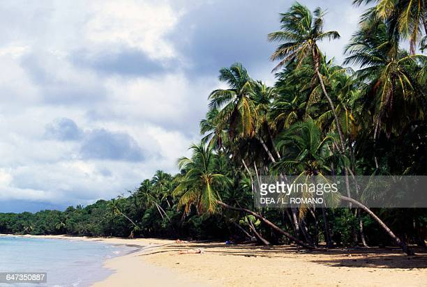 Palm trees on the white sand beach of Les Salines Martinique Overseas Department of the French Republic