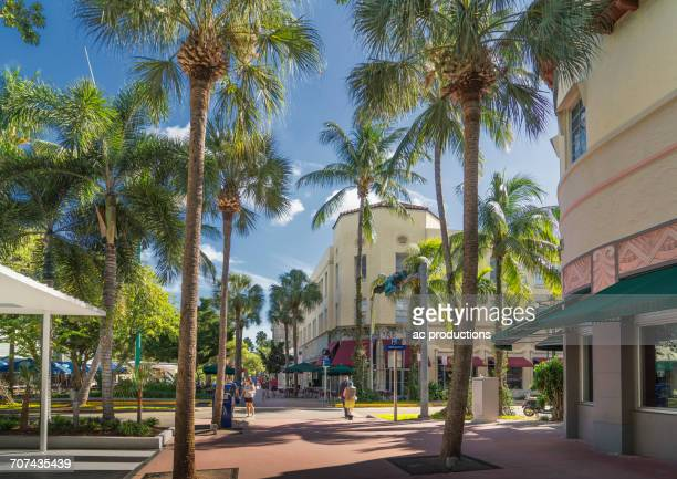 palm trees on urban sidewalk, miami beach, florida, united states - miami imagens e fotografias de stock