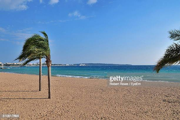 palm trees on windy beach - palm beach cannes stock photos and pictures