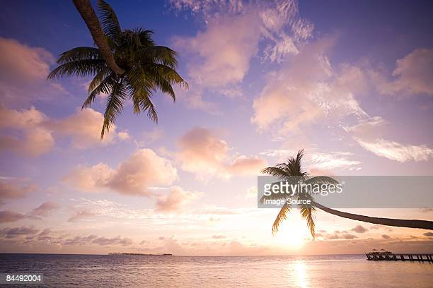 Palm trees over sea