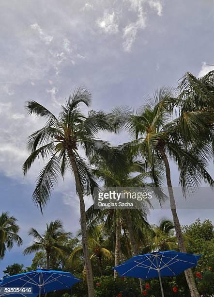 palm trees over the patio umbrellas, lakeland, florida, usa - lakeland florida stock pictures, royalty-free photos & images