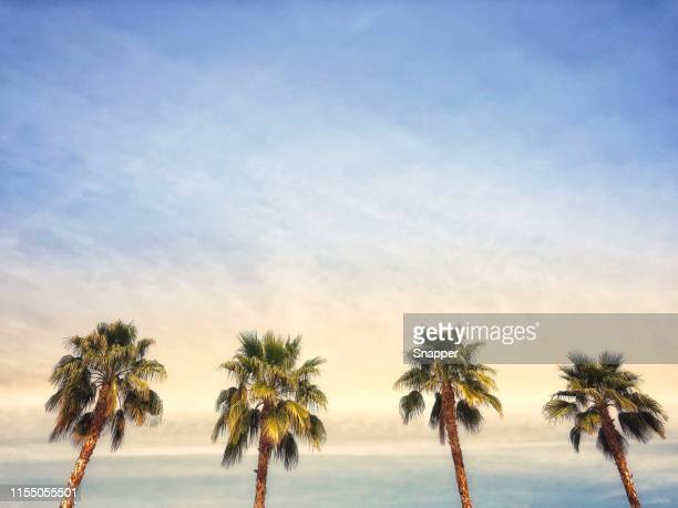 palm trees, palm springs, california, united states - palm springs stock-fotos und bilder