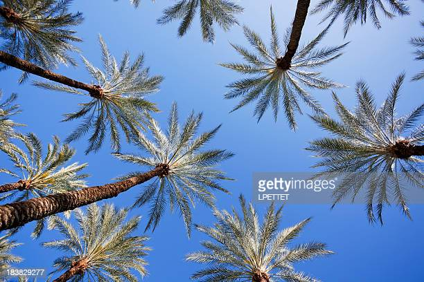 palm trees - beverly hills california stock pictures, royalty-free photos & images