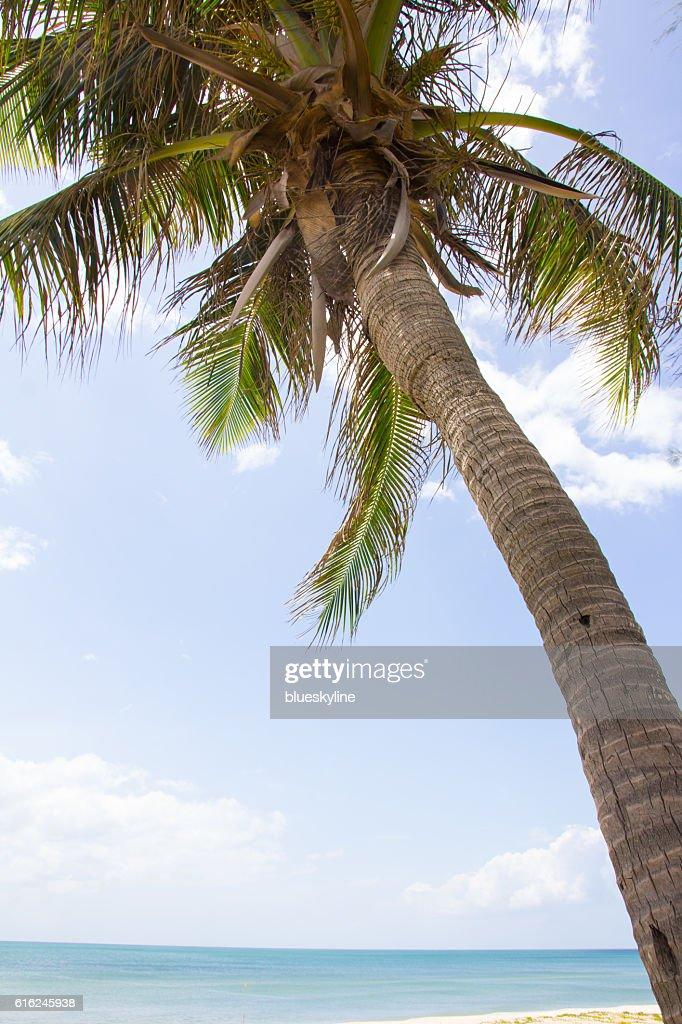 Palm Palmen  : Stock-Foto