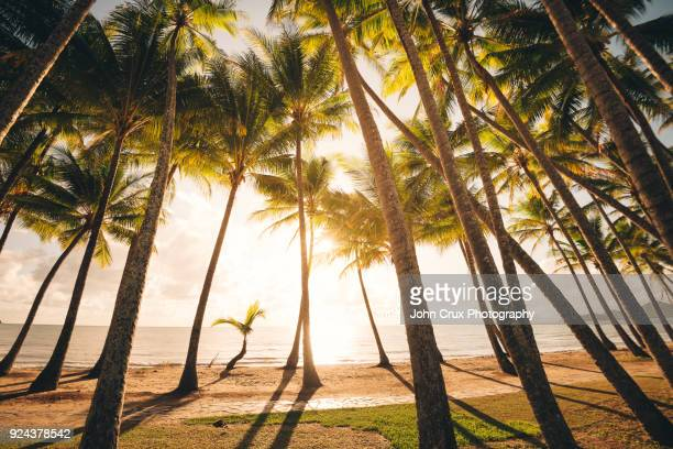 palm trees queensland