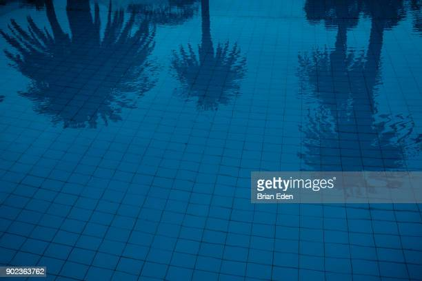 Palm trees reflect in the water of a hotel resort swimming pool