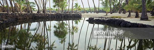 palm trees reflected in water - timothy hearsum stock photos and pictures