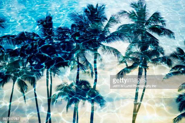palm trees reflecting in rippling water - john lund stock pictures, royalty-free photos & images