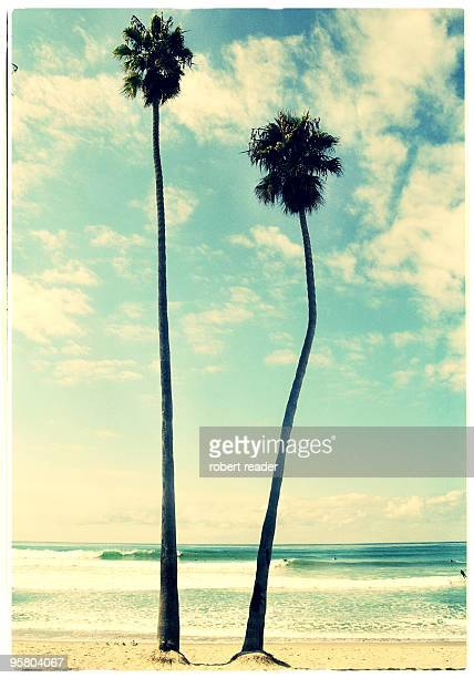 palm trees, san clemente, california - san clemente california stock pictures, royalty-free photos & images