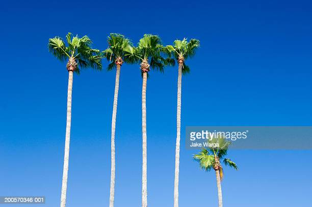 palm trees, san diego, california, usa - jake warga stock pictures, royalty-free photos & images