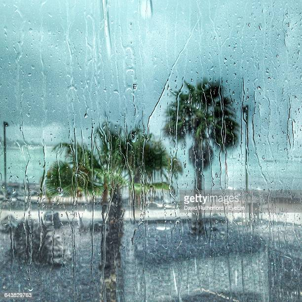 palm trees seen through wet glass window during rainy season - arrecife stock photos and pictures