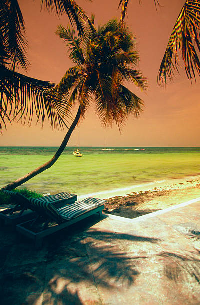 Palm trees, shadows and sailboat at sunset on George Smathers Beach, Key West, Florida, USA