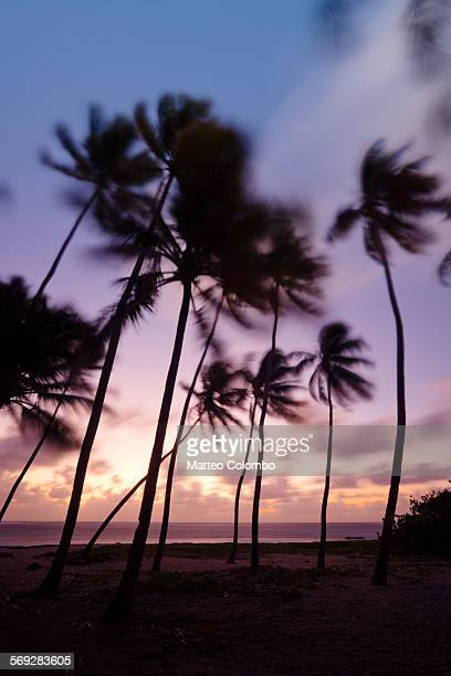 Palm trees silhouette at sunset, Caribbean