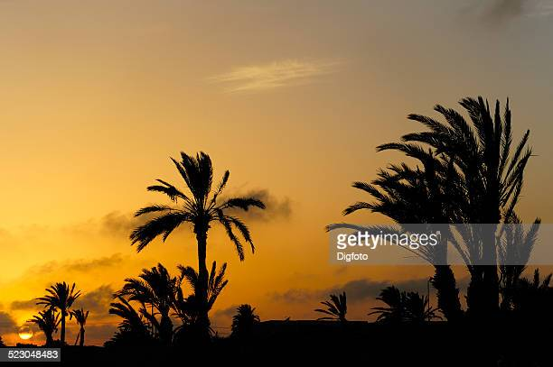 palm trees silhouetted at sunset, djerba, tunisia, maghreb, north africa, africa - djerba photos et images de collection