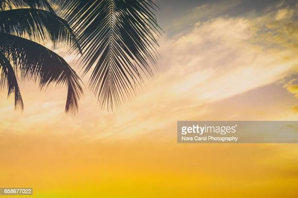 Palm Trees Silhouettes and Sunset Retro Sytyed backgrounds