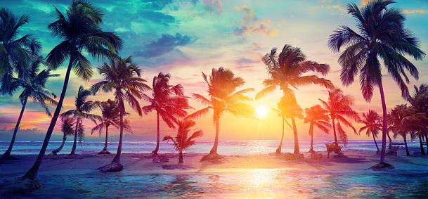 Palm Trees Silhouettes On Tropical Beach At Sunset - Modern Vintage Colors 1124821546