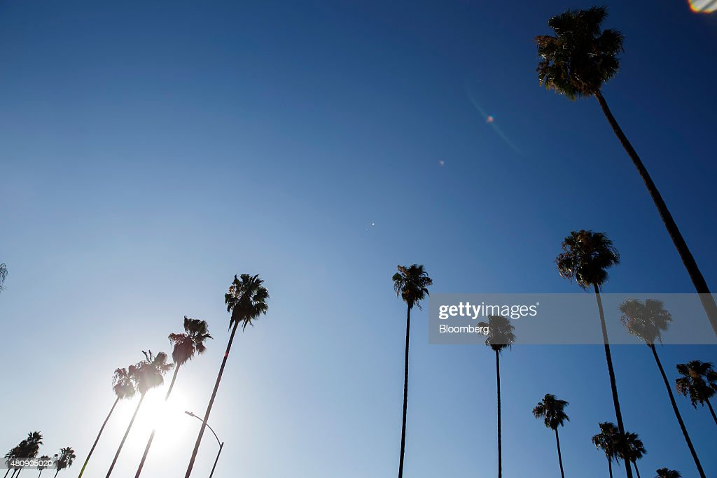 Palm Trees in Los Angeles : ニュース写真