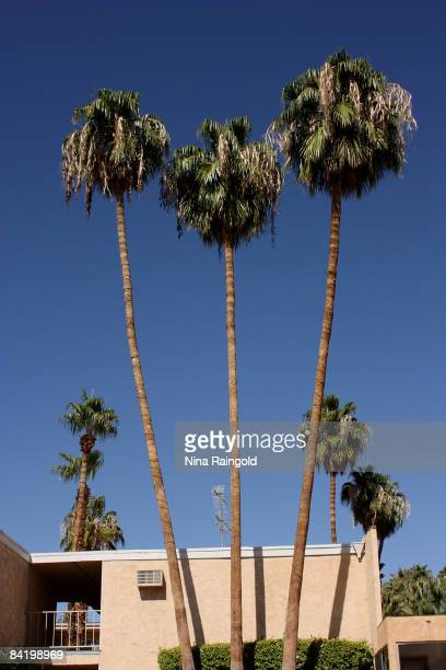 Palm trees stand outside a motel on October 17, 2008 in Palm Springs, California.