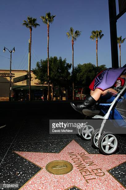 Palm trees stand over the stars on the Hollywood Walk of Fame near Hollywood and Highland as many of the areas palms fade into history because of a...