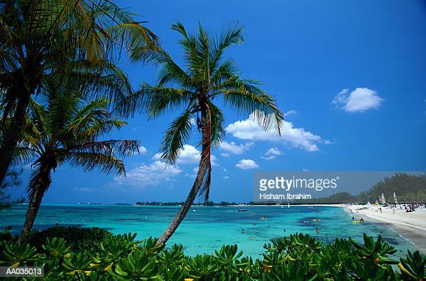 palm trees & tropical beach, bahamas - cable beach bahamas stock photos and pictures