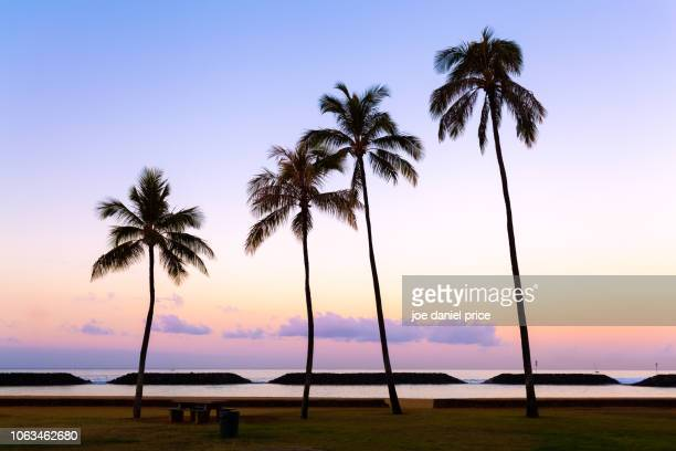 palm trees, waikiki beach, honolulu, oahu, hawaii, america - waikiki stock pictures, royalty-free photos & images