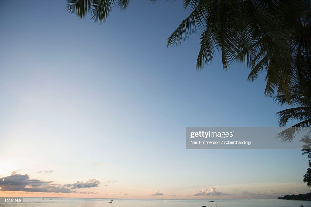Palm Trees, West Coast, Barbados, West Indies, Caribbean, Central America : Stock Photo