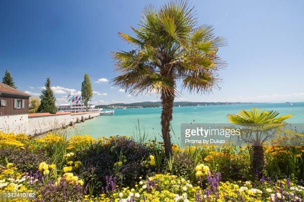 Palm trees with blooming flowers, spring, Mainau Island, Flower Island, Constance, Lake Constance, Baden-Württemberg, Germany, Europe.