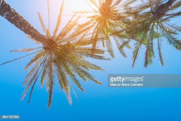 Palm trees with clear sky