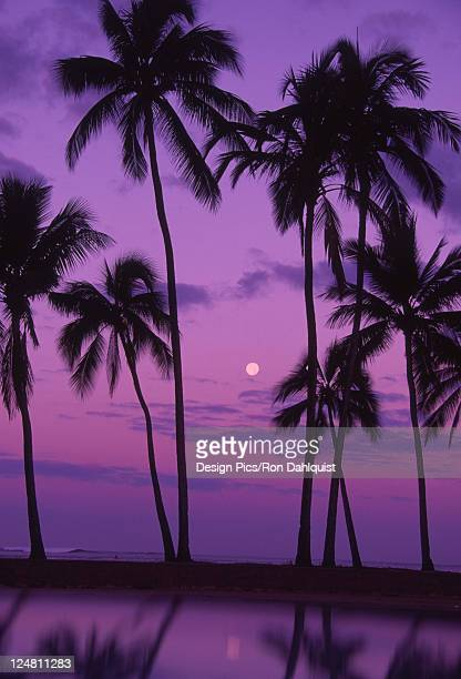 palm trees with moon in a bright pink and purple sky, reflecting on still water. - pink moon stock pictures, royalty-free photos & images
