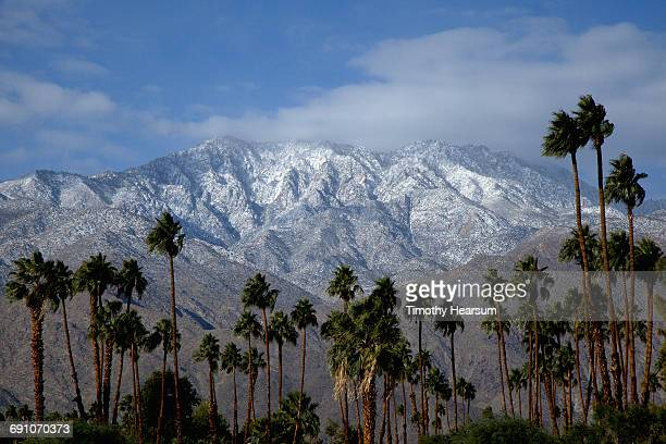 palm trees with snow covered mountains beyond - timothy hearsum stock pictures, royalty-free photos & images