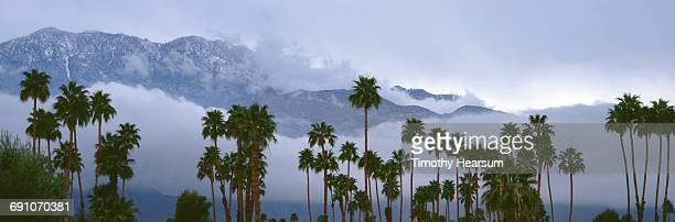 palm trees with snow covered mountains beyond - timothy hearsum stock photos and pictures