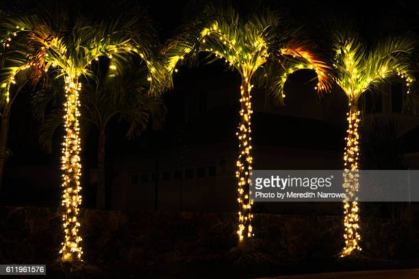 palm trees with twinkle lights - hawaii christmas stock pictures, royalty-free photos & images