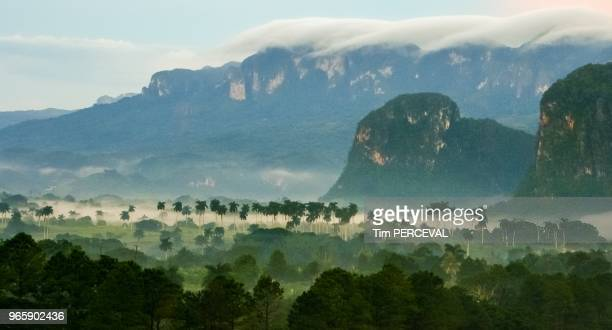 Palm Valley and Mist Vinales