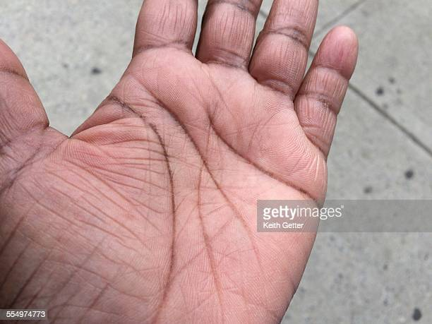 Palm Wrinkles