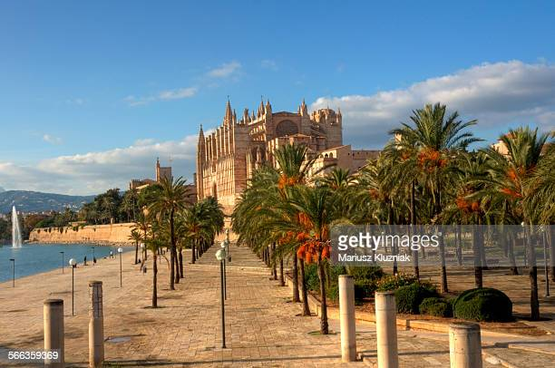 palma de mallorca la seu gothic cathedral - palma majorca stock photos and pictures