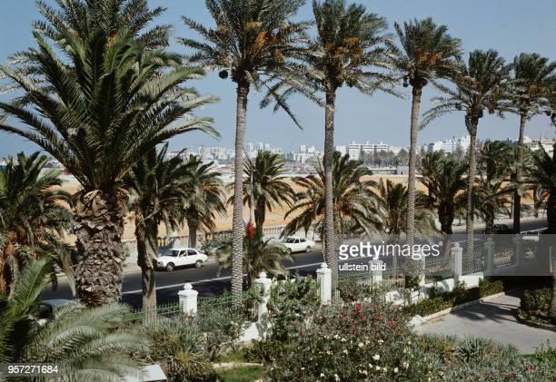 Palmen an einer Hauptstraße am Meer in der libyschen Hauptstadt Tripolis aufgenommen im September 1979