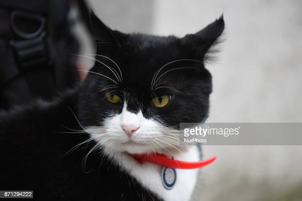 Palmerston Foreign Office's cat is pictured at Downing Street London on November 7 2017