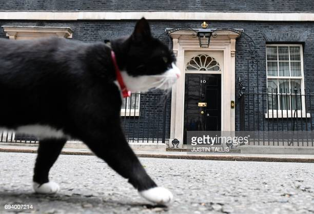 Palmerston the Foreign Commonwealth Office cat stalks past 10 Downing Street in front of the waiting media in central London on June 9 2017 after...